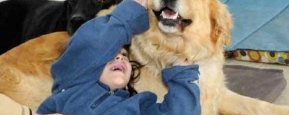 Mejora el rendimiento escolar de tus hijos gracias a la animal terapia